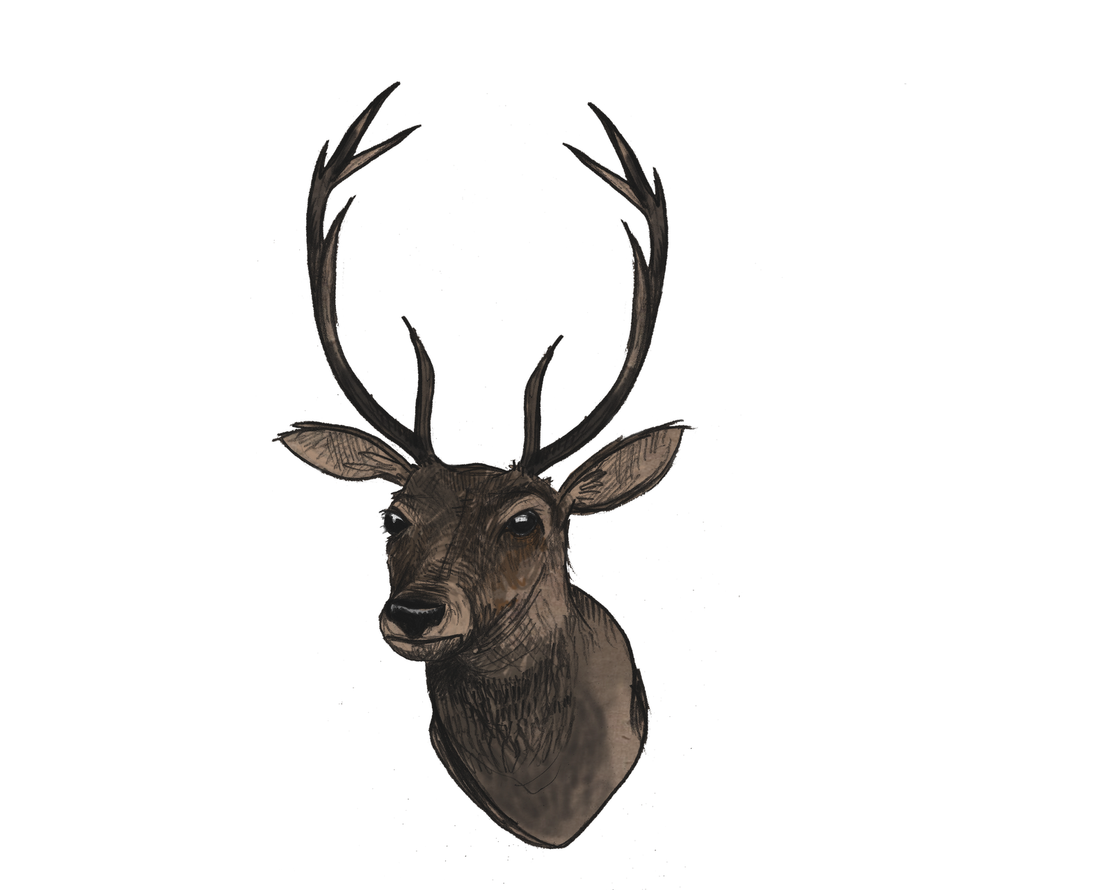 Deer head png. File mart