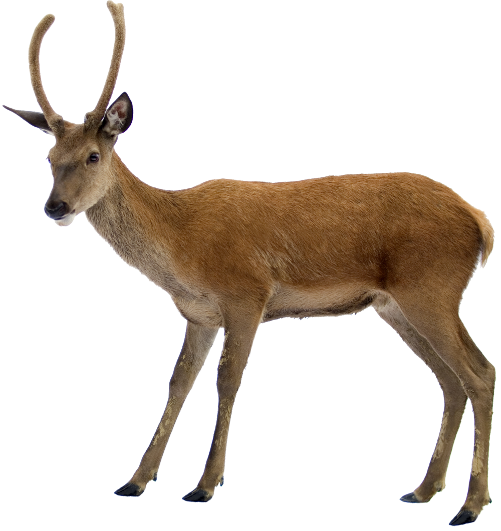 Deer png images. High quality web icons