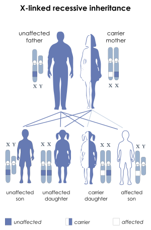 Definition svg mother. X linked ichthyosis wikipedia