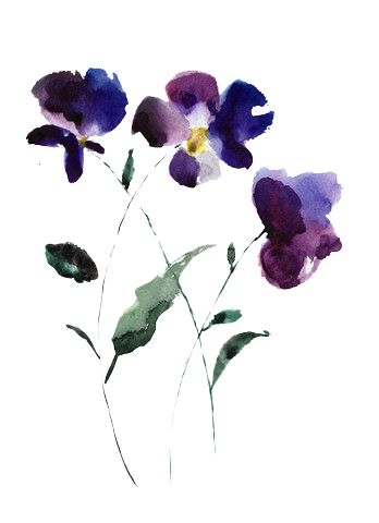 Delphinium Drawing Tattoo Transparent Png Clipart Free Download