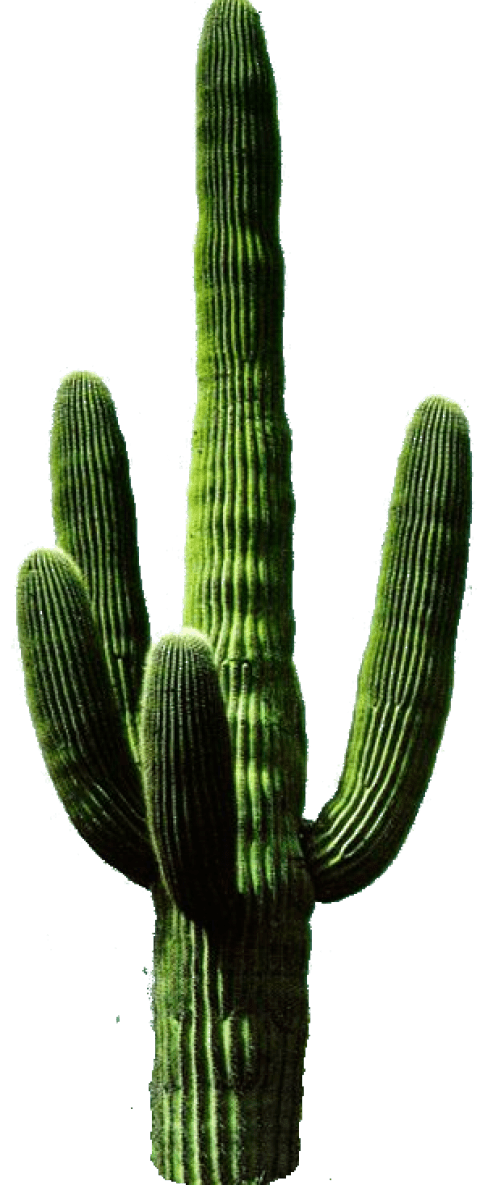 Desert cactus png. Free images toppng transparent