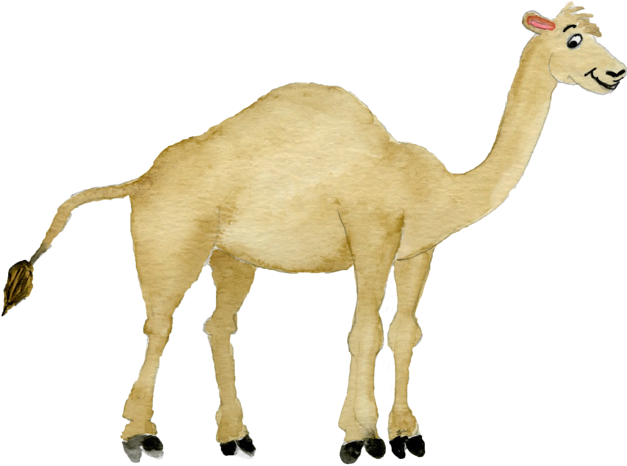 Desert clipart watercolor. Camel digital download