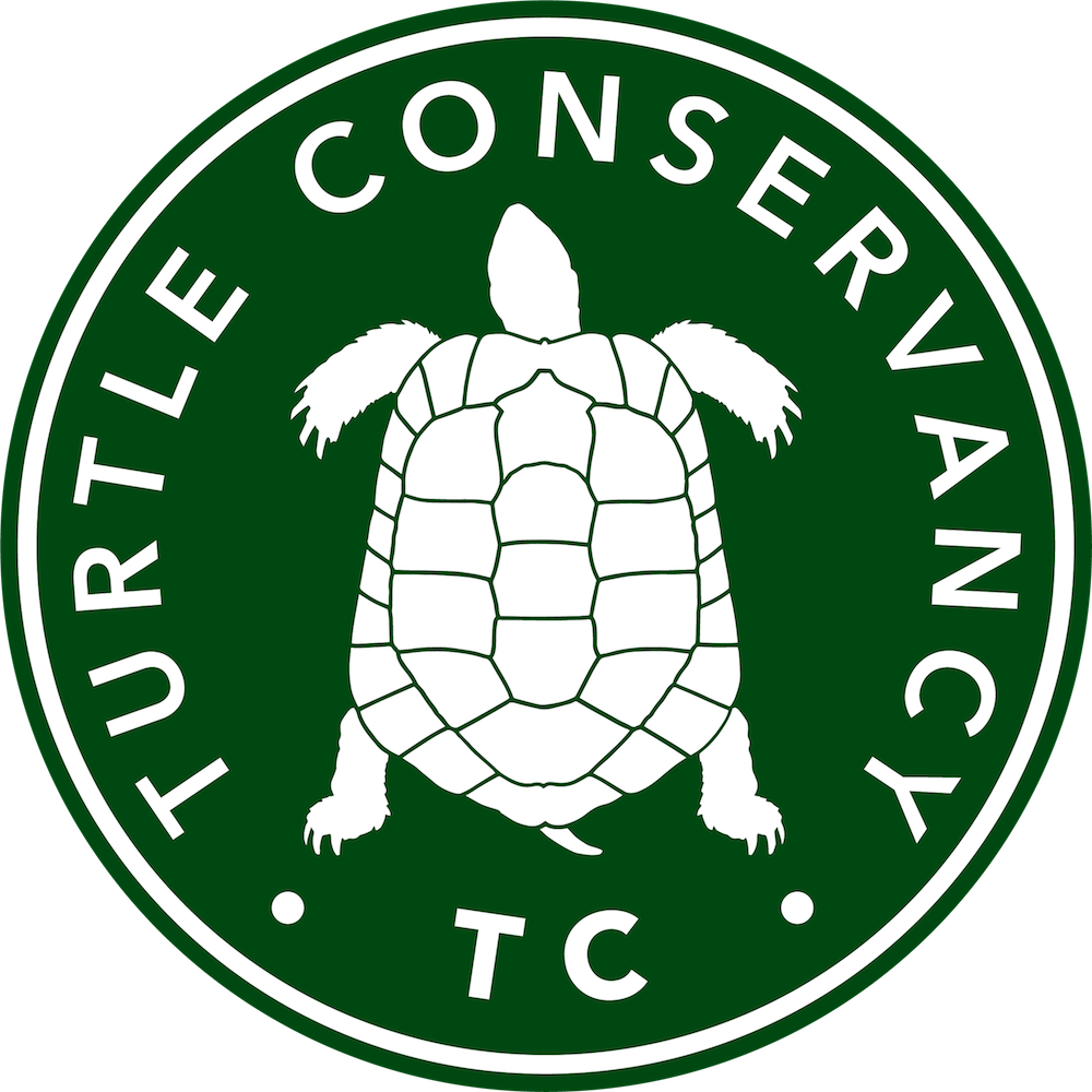 Tortoise clipart run. Turtle conservancy the mexican