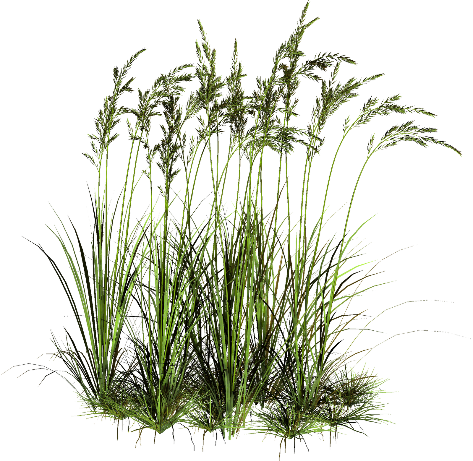 Tall grass png. Transparent pictures free icons