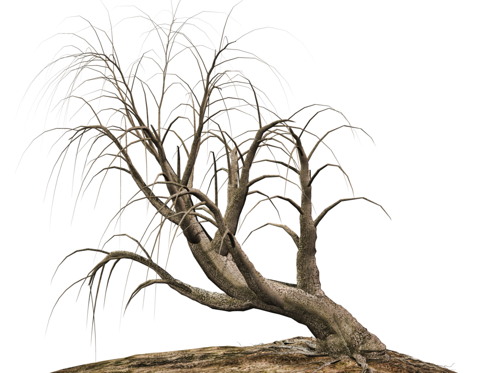 Deviantart stock png. Trees by roy d