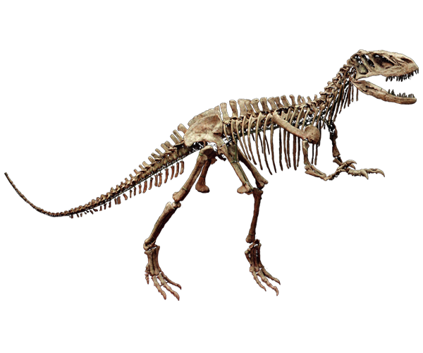 Dinosaur bone png. Skeleton