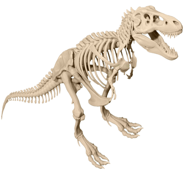 Dinosaur bones png. T rex skeleton model