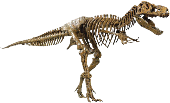 transparent bone dinosaur