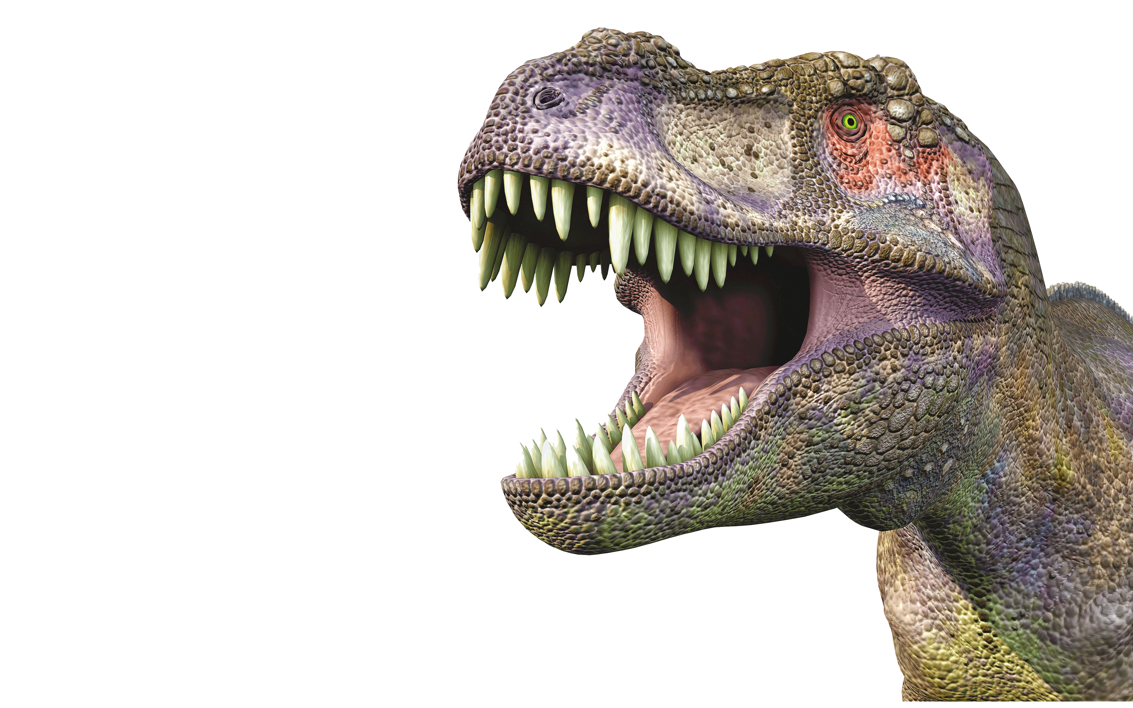 Dinosaur head png. Tyrannosaurus huge wallpapers com