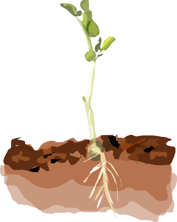 Sprout clipart coffee plant. Sprouting soil computer icons