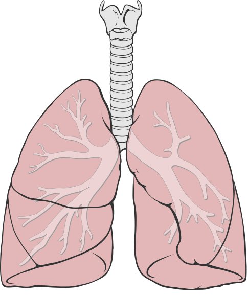 Disease drawing lung. The value of an