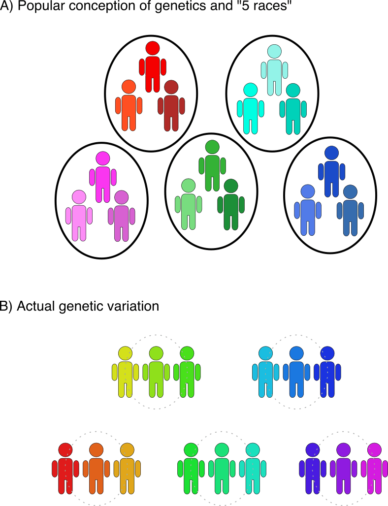 Diversity drawing humanity. How science and genetics