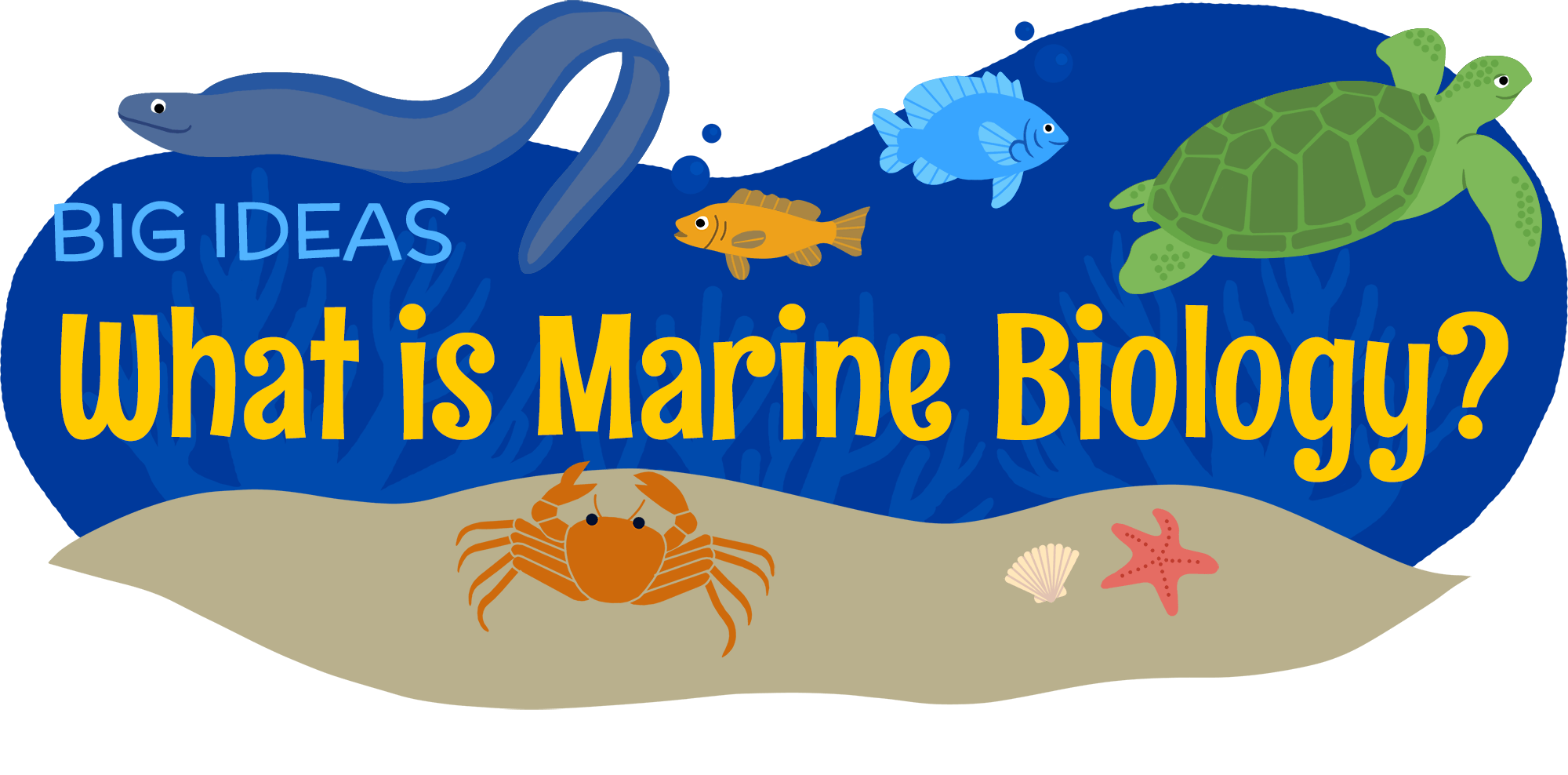 What is biology amnh. Diving clipart marine biologist graphic