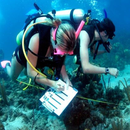 Biology free science group. Diving clipart marine biologist picture library download