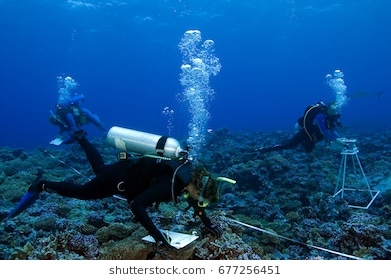 Scuba diver free real. Diving clipart marine biologist image free download