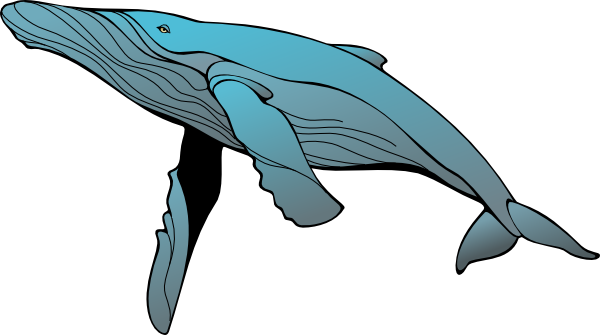 Diving clipart whale. Free blue art download