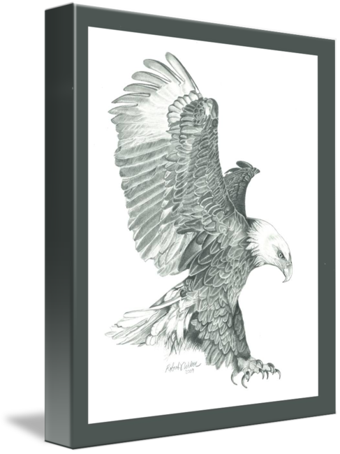Bald eagle in a. Diving hawk png svg black and white