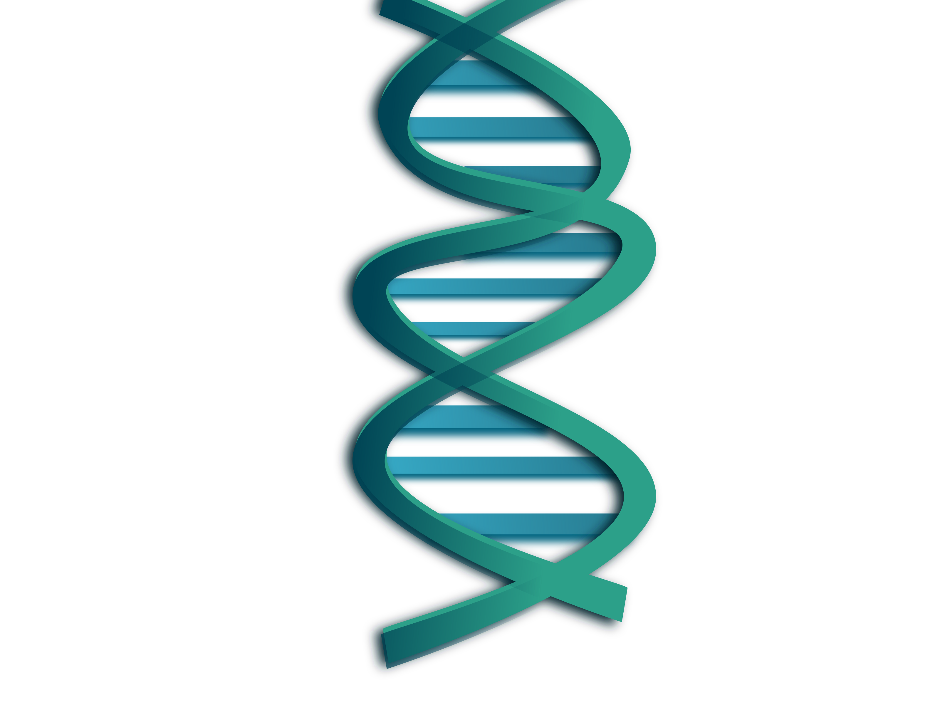 Transparent dna simple. Clipart big image png