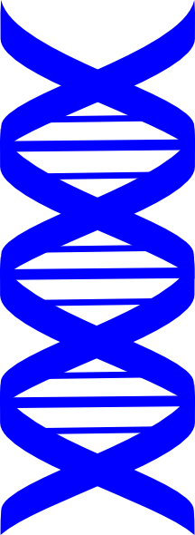 Dna clipart blue. Strand clip art at