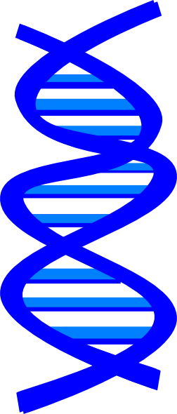 Clip art at clker. Transparent dna jpeg picture
