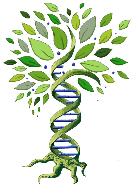 Dna clipart tree. Quotidian genealogy sharing trees