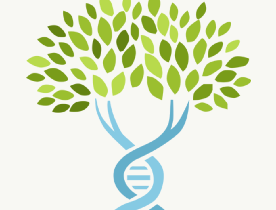 Dna clipart tree. Traditional genealogy and case