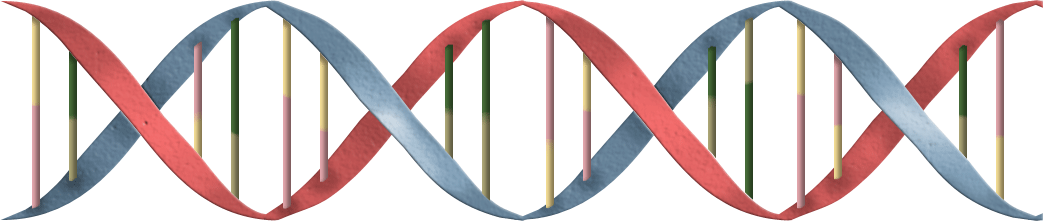 Dna helix png. Double janis genealogy blog