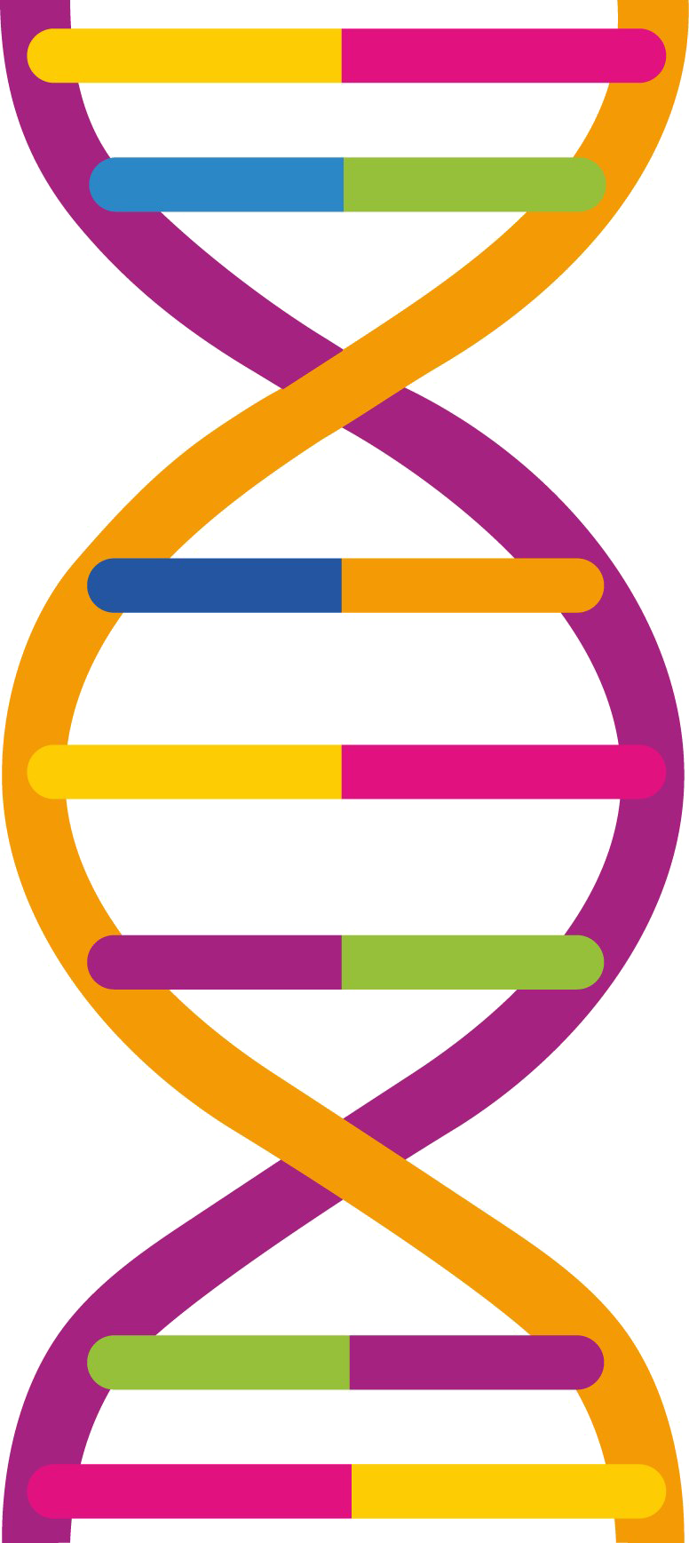 Pic mart. Dna png picture transparent