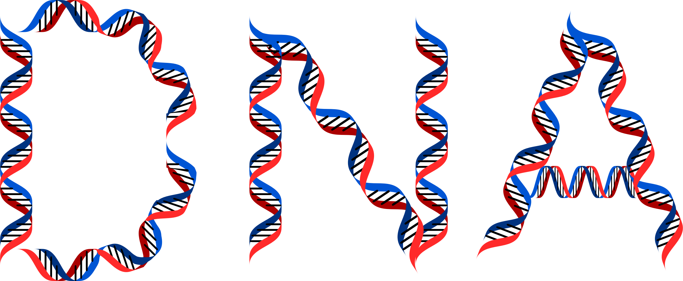 Dna png. Typography icons free and