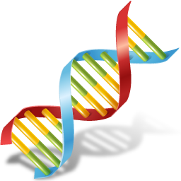 Dna png. Body icon medical iconset