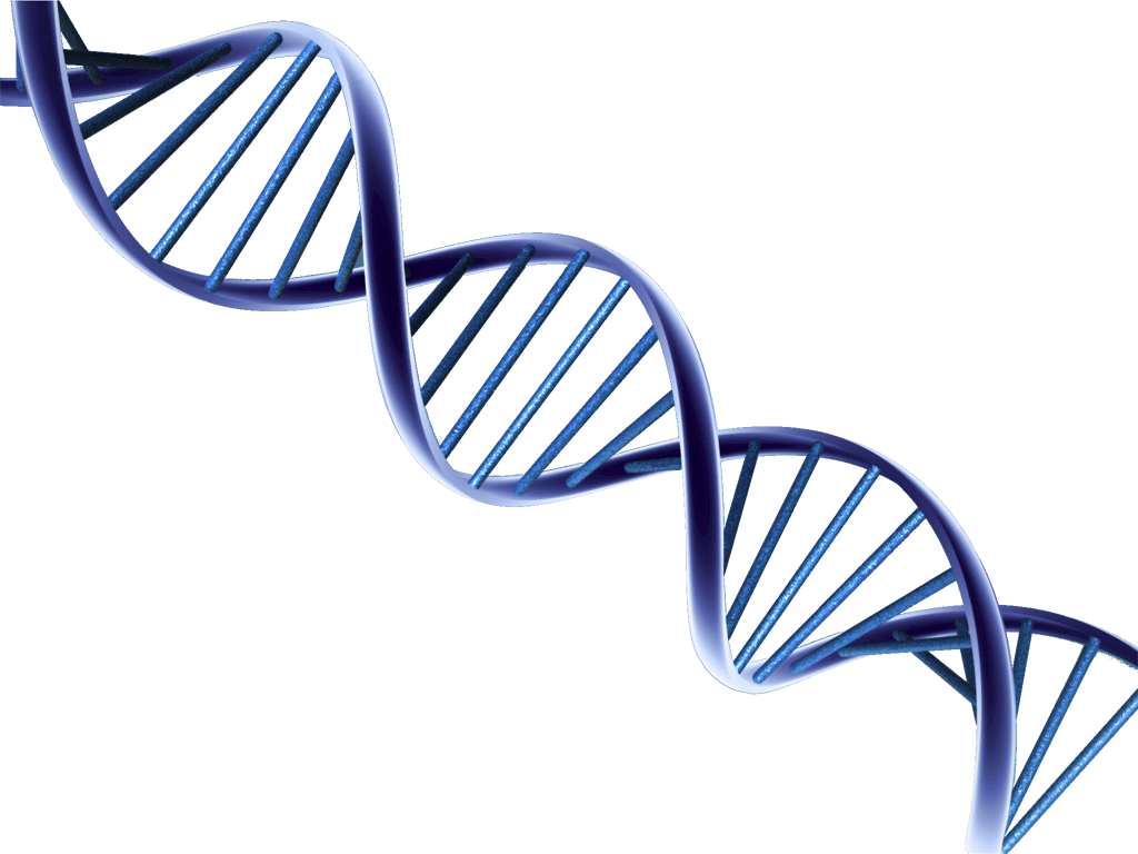Images free download. Dna png clip art freeuse stock