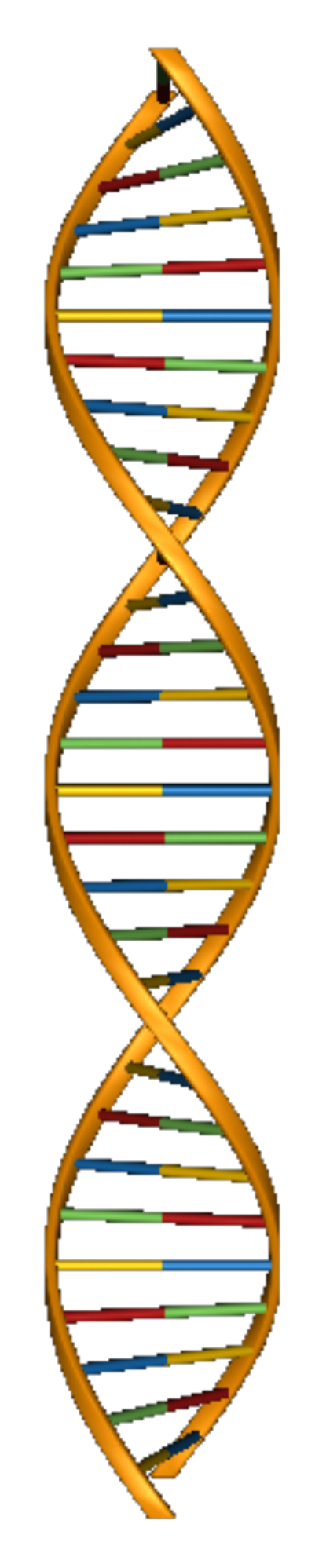 Dna structure png. Smart exchange usa search