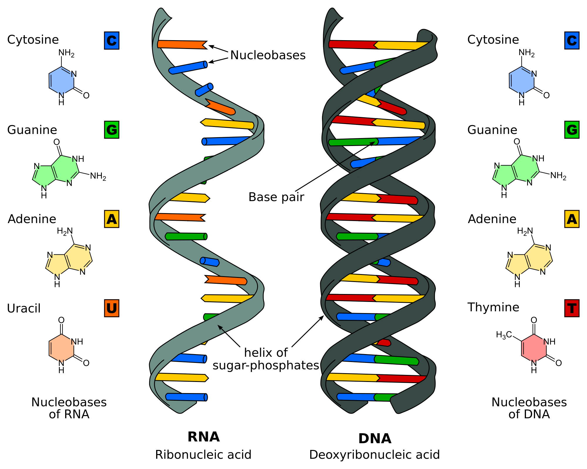 dna svg rna label