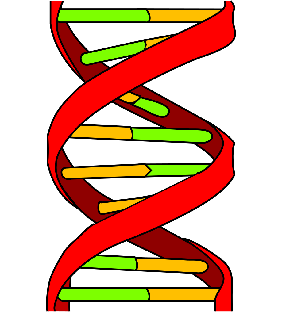 Dna svg clipart. File icon wikipedia filedna