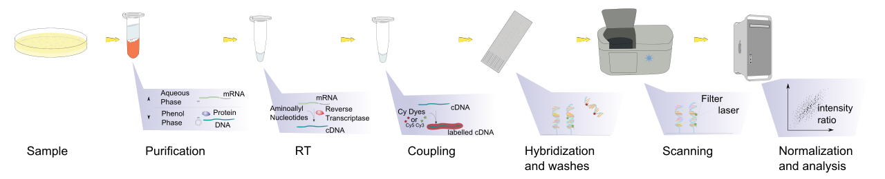 Dna svg horizontal. File microarray exp wikimedia