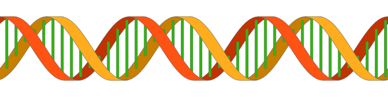 Vertical vector dna helix. Drawing a double in