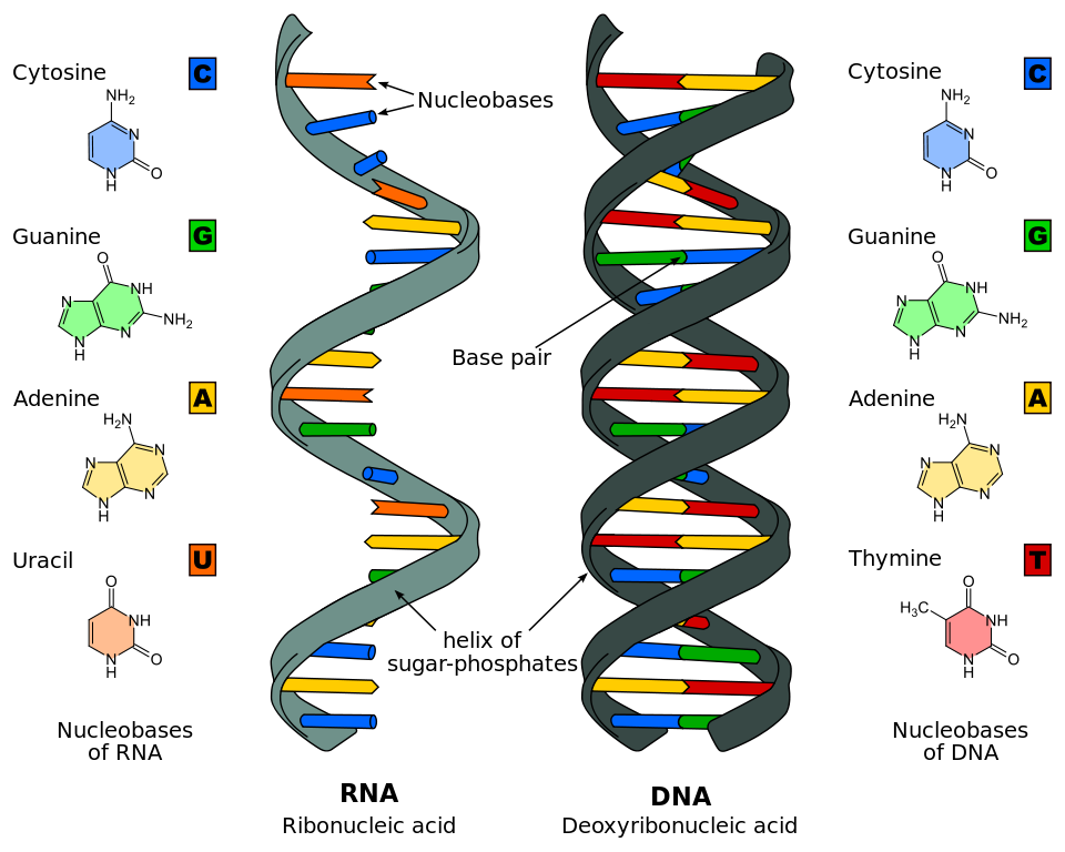 Nucleic acids biology for. Transparent dna jpeg banner black and white stock