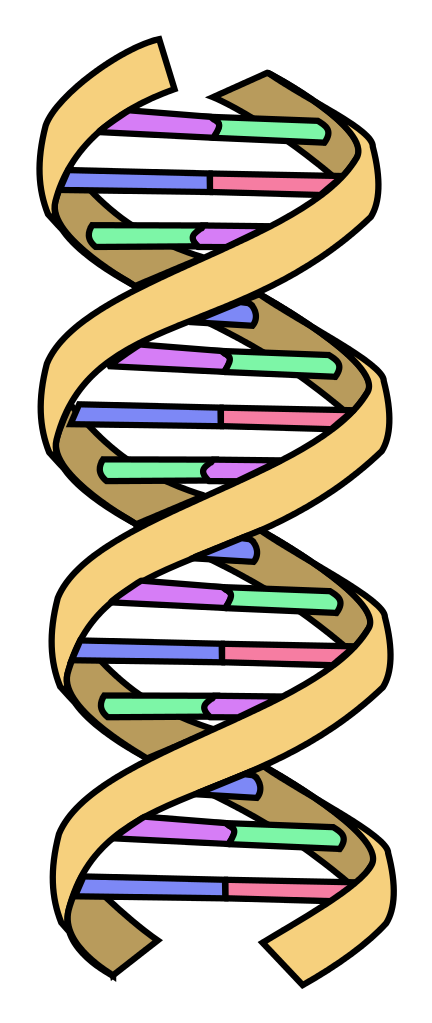 Dna svg ouroboros. File simple wikipedia filedna