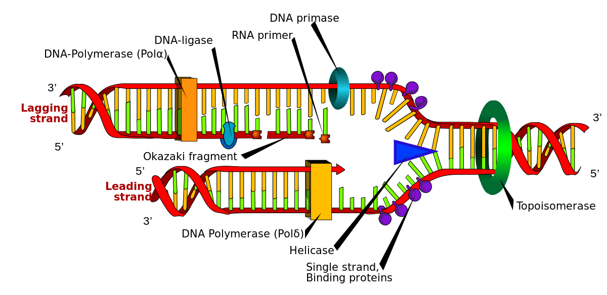 enzyme drawing labeled