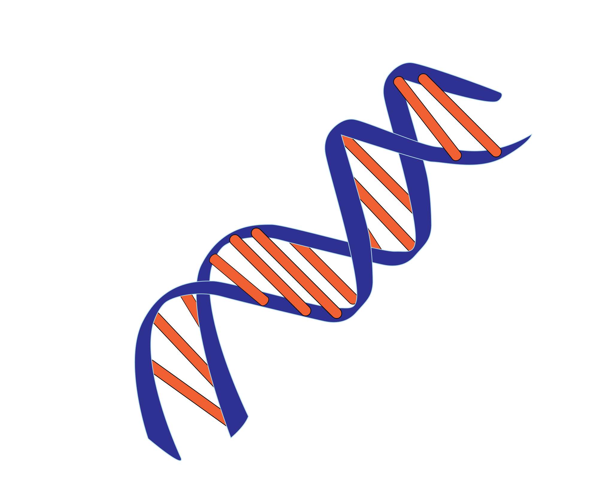 Dna svg. File small wikimedia commons