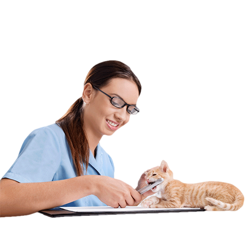 Doctor sitting png. Cat physician pet beauty