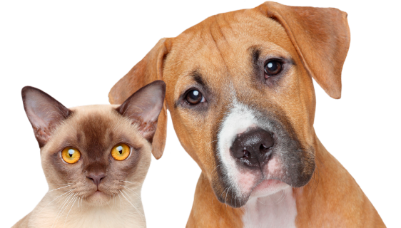 Cats and dogs png. Pet tech cpr first