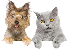 Cats and dogs png. Happy dog cat clipart