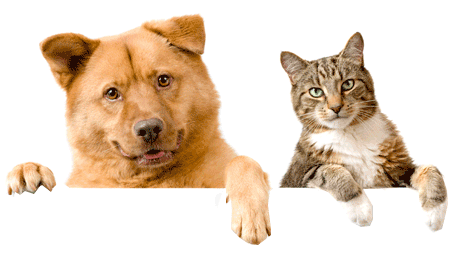 Dog and cat png. Transparent background image
