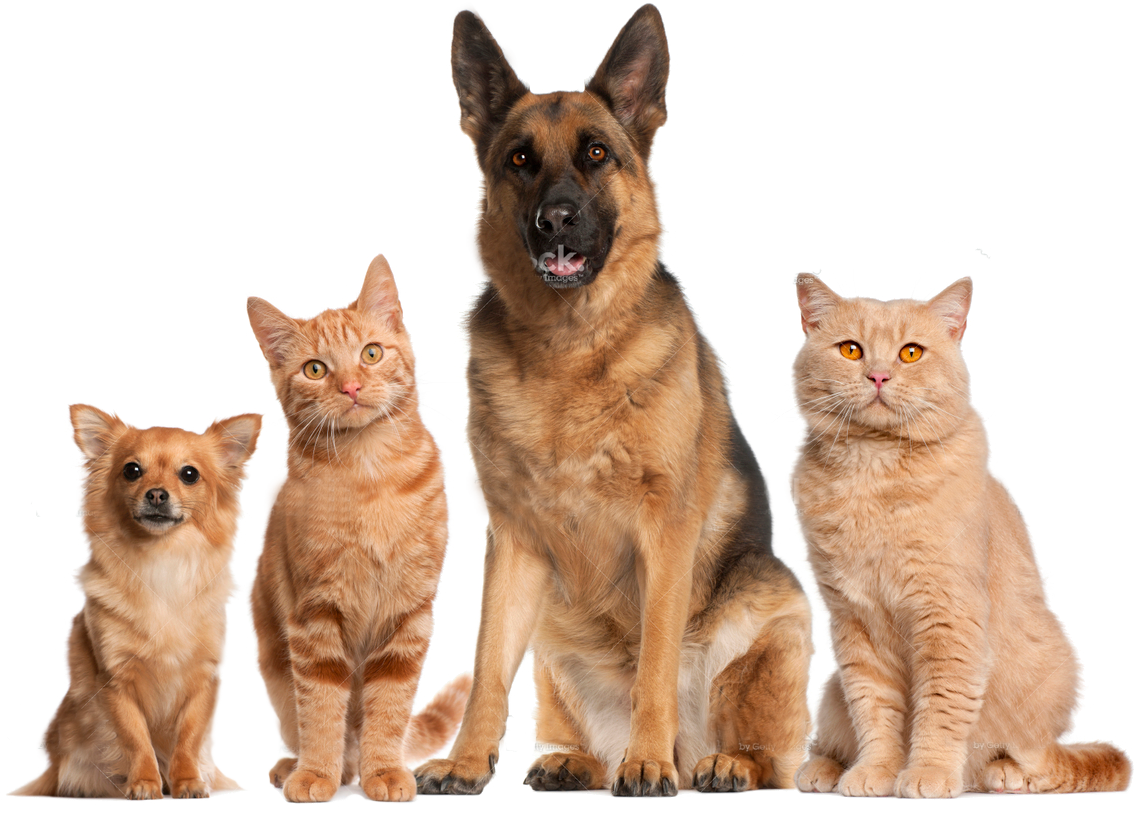Dog and cat png. No background transparent healthy
