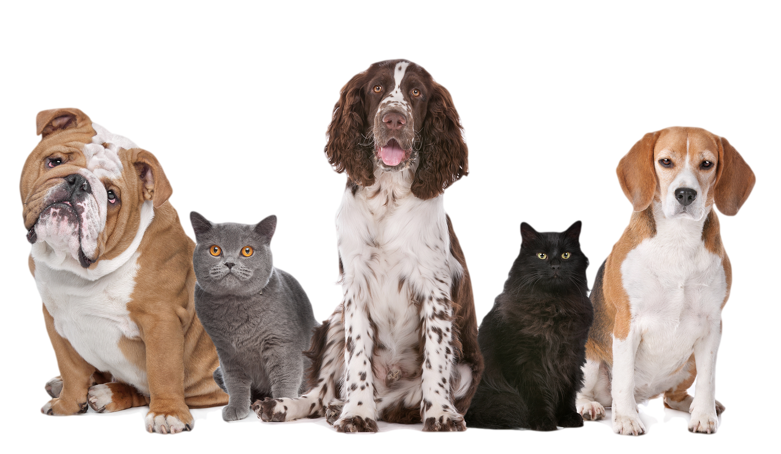 Hd and cats transparent. Dogs png jpg black and white