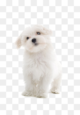 Png images download resources. Dog clip art clear background image library library