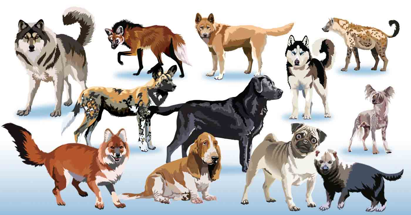 Dog clip art domestic dog. Pack of dogs clipart