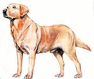 The corticalcafe card maker. Dog clip art realistic banner free stock