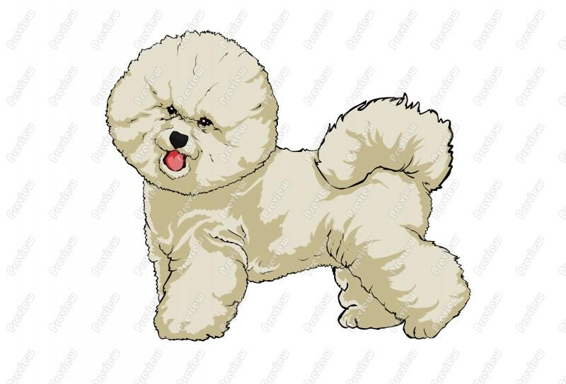 Dog clip art realistic. Bichon frise cartoon fris
